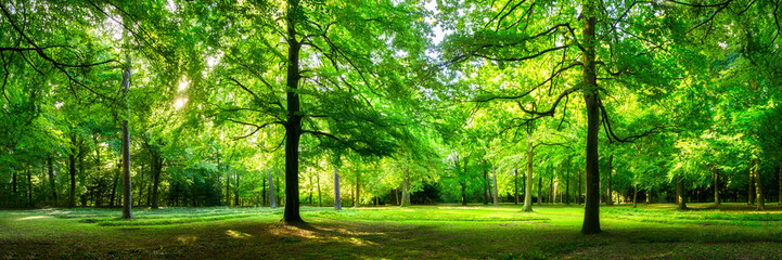 Fototapeta Grüne Wald Landschaft als Panorama im Sommer