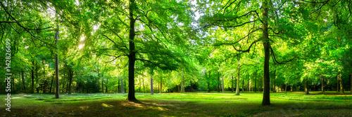 Fototapeta Zielony las krajobraz jako panorama w lecie