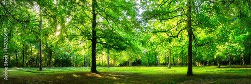 zielony-park