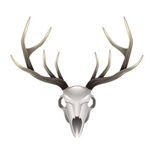 Deer Skull Front View Isolated...