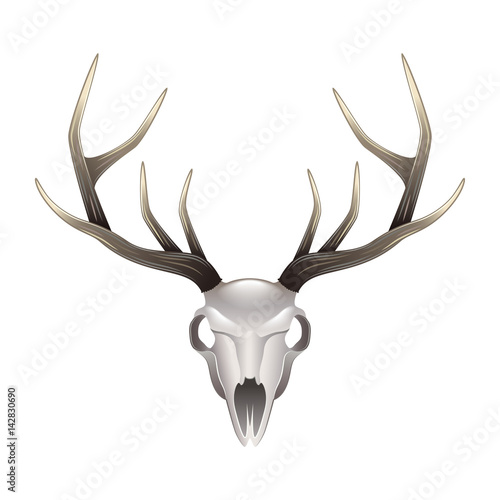 Poster Crâne aquarelle Deer skull front view isolated vector