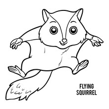Coloring Book, Flying Squirrel