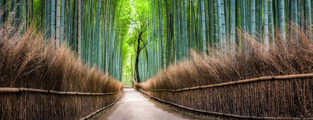 Japoński bambusowy las w Arashiyama, Kyoto, Japonia