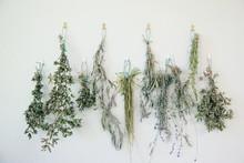 Fresh Dried Organic Herbs From...