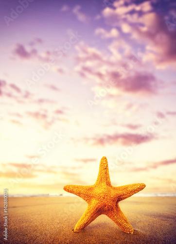 Starfish on the beach on a sunny day Canvas Print