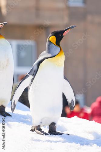 Deurstickers Pinguin 雪の上のキングペンギン
