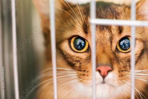 Fotografia, Obraz  Gatto in gabbia, Sono in Trappola