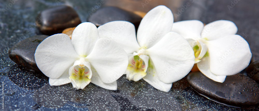 Three orchid flowers and stones.
