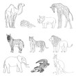 Vector illustration, the image of animals, animals. Black and white line. Elephant, kangaroo, camel, lion, zebra, rhinoceros, giraffe, snake, crocodile and tiger