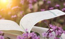 Open Holy Quran Book Between F...