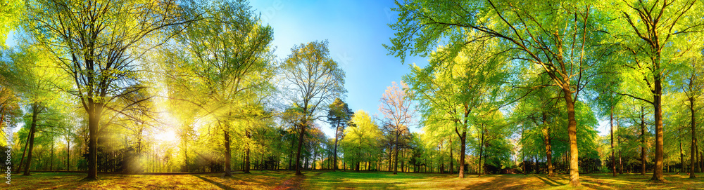 Obraz Gorgeous panoramic spring scenery with the sun beautifully illuminating the fresh green foliage fototapeta, plakat