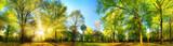 Fototapeta Las - Gorgeous panoramic spring scenery with the sun beautifully illuminating the fresh green foliage
