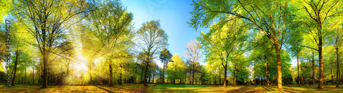 Fotobehang Pistache Gorgeous panoramic spring scenery with the sun beautifully illuminating the fresh green foliage