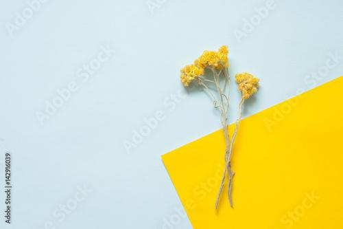 Carta da parati  Twigs of dried immortelle on a pastel background