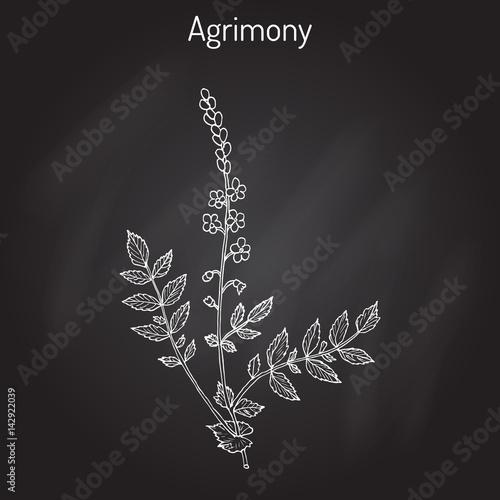 Medicinal plant - common agrimony agrimonia eupatoria Wallpaper Mural