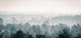 Sosnowy zima las w mgle. - 142936691