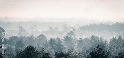 Spoed Foto op Canvas Wit Pine winter forest in mist.