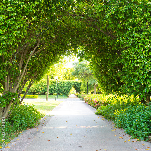 Green archway in the park at summer. Wallpaper Mural
