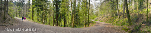 Photo Stands Road in forest Wandern im Wald