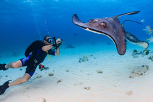 SCUBA Diver And Stingray Underwater