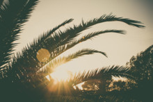 Palm Branches Or Palm Leaves At Sunset. Vintage Retro Artistic Blury Edit.