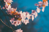 Spring tree branch in blossom, or cherry blossom. Artistic retro vintage edit background with selective focus and copy space for text.