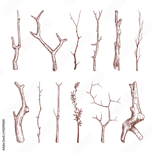 Fototapeta Hand drawn wood twigs, wooden sticks, tree branches vector rustic decoration elements obraz