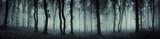 Fototapeta Forest - dark forest panorama fantasy landscape