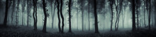 Dark Forest Panorama Fantasy L...