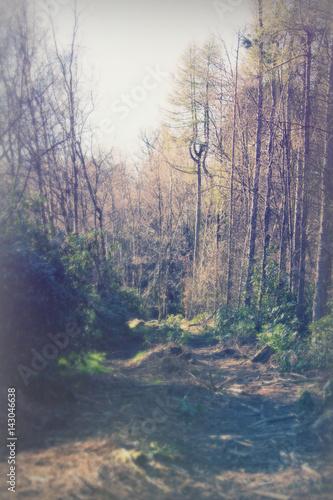 Foto auf Acrylglas Wald im Nebel Low sun through trees in the woods