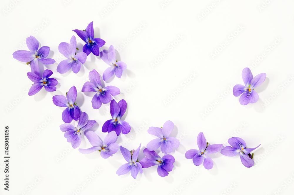 Fototapety, obrazy: Veilchenblüten