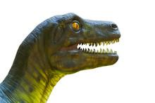 Closeup Dinosaur Head Isolated On White.