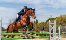 Equitation, Saut D'obstacles, ...