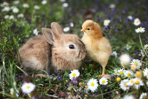 Bunny rabbit and chick are best friends