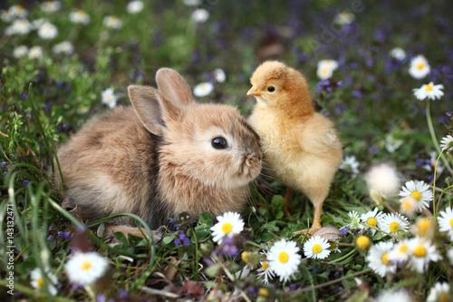 Fotodibond 3D Królik i królik są najlepszymi przyjaciółmi