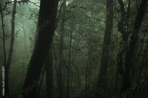 Foto auf Acrylglas Wald im Nebel photo