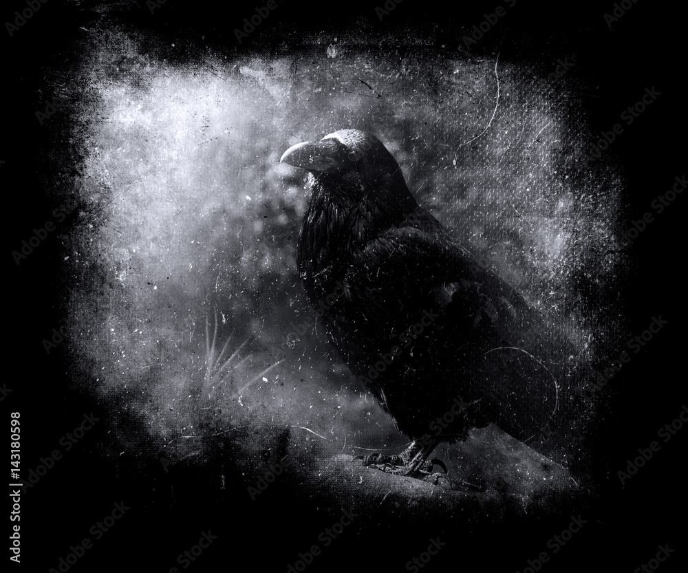 Grunge Vintage Scary Wallpaper With Black Crow Horror Background For Halloween Concept Wall Mural Wilqku