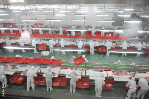 Photo group of workers working in a line in pork industry plant.