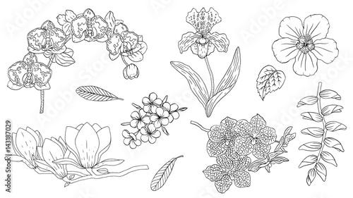 Tropical Flowers Set With Hibiscus Plumeria Heliconiamagnolia