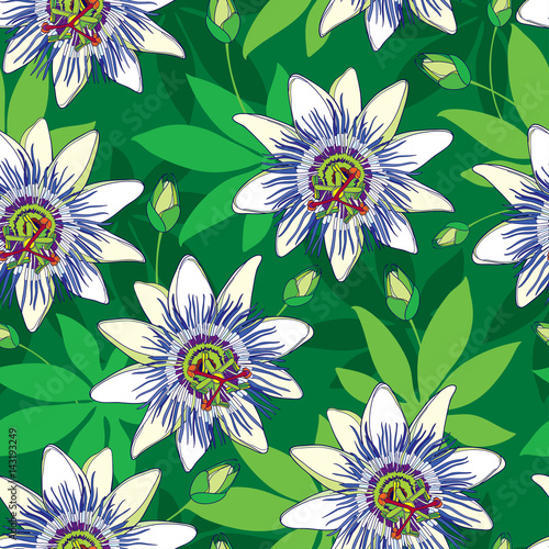 Vector Seamless Pattern With Outline Tropical Passiflora Or