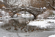 Centtral Park. Gapstow Bridge