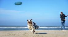 Hund Spielt Mit Einem Mann Fri...