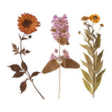Set of wild dry pressed flowers and leaves - 143207677