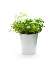 Home  Grown Herbs In Metal Buc...