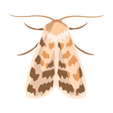 Ash Sphinx Moth Or Manduca Jasminearum. Colorful Cartoon Illustration