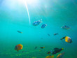 Underwater landscape with tropical fishes. Sunny undersea scene with coral fishes.