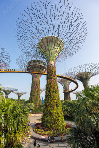 Photo  Super Tree Grove at Gardens By The Bay Singapore
