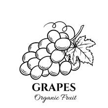 Hand Drawn Grapes Icon.