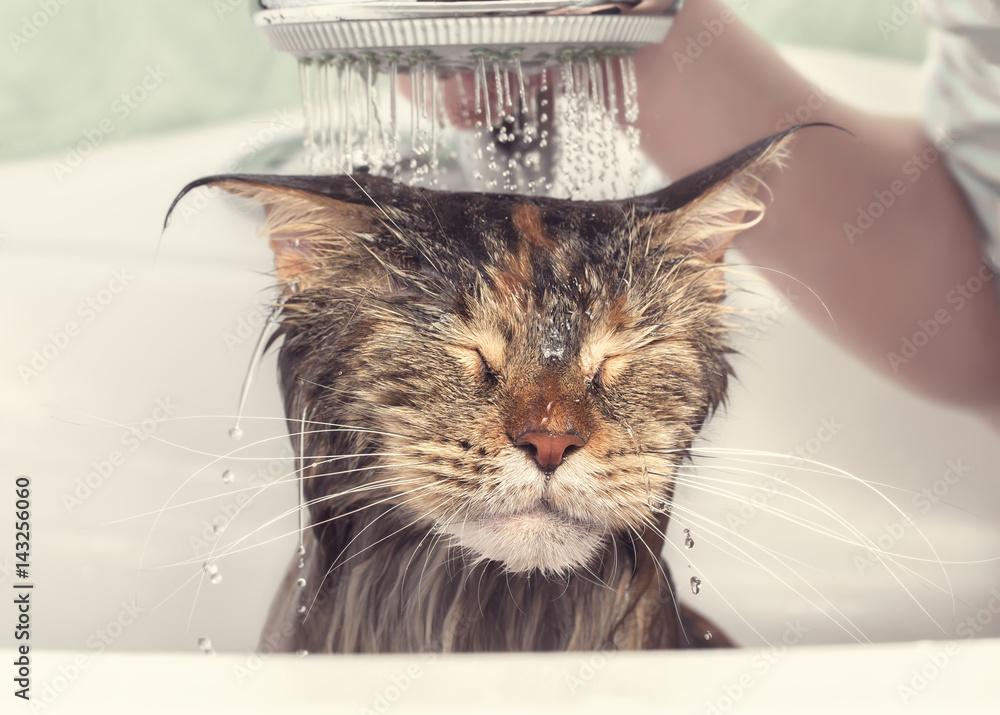 Fototapeta Wet cat in the bath