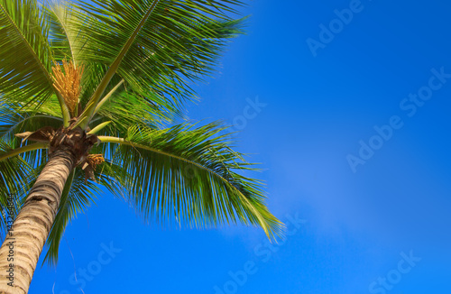 Spoed Foto op Canvas Natuur Green palms and blue sky.